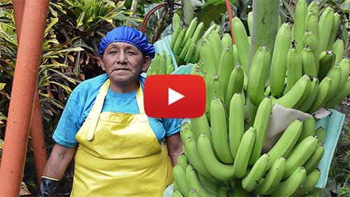 AgroFair_Rosa_producer_story