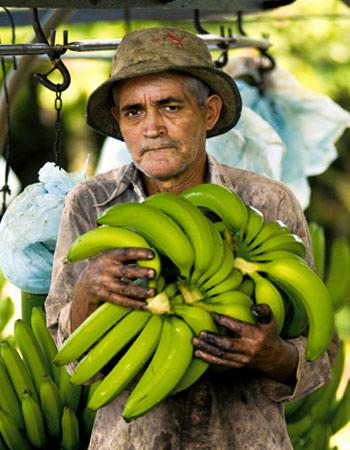 AgroFair-Bio-Organic-Puree-Farmer