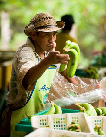 AgroFair-Bio-Organic-Puree-Farmer-07