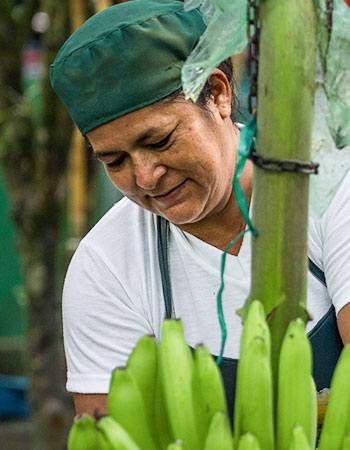AgroFair-Bio-Organic-Puree-Farmer-09