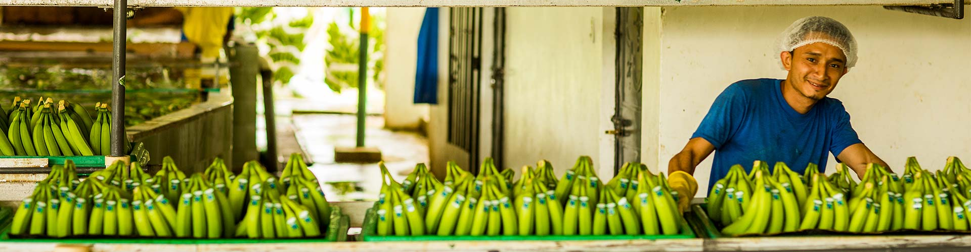 AgroFair-Fairtrade-Bio-Organic-Bananas-Fruit-home-slider-01