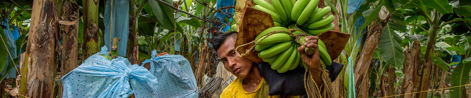 AgroFair-Fairtrade-Bio-Organic-Bananas-Fruit-who-we-are-slider-01