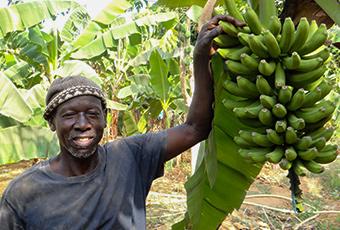 AgroFair-Senegal_Improving-bananas-for-the-local-market-02