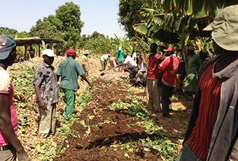 AgroFair-Senegal_Improving-bananas-for-the-local-market-09