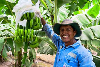 Agrofair-celebrates-25-years-of-fairtrade-bananas-03